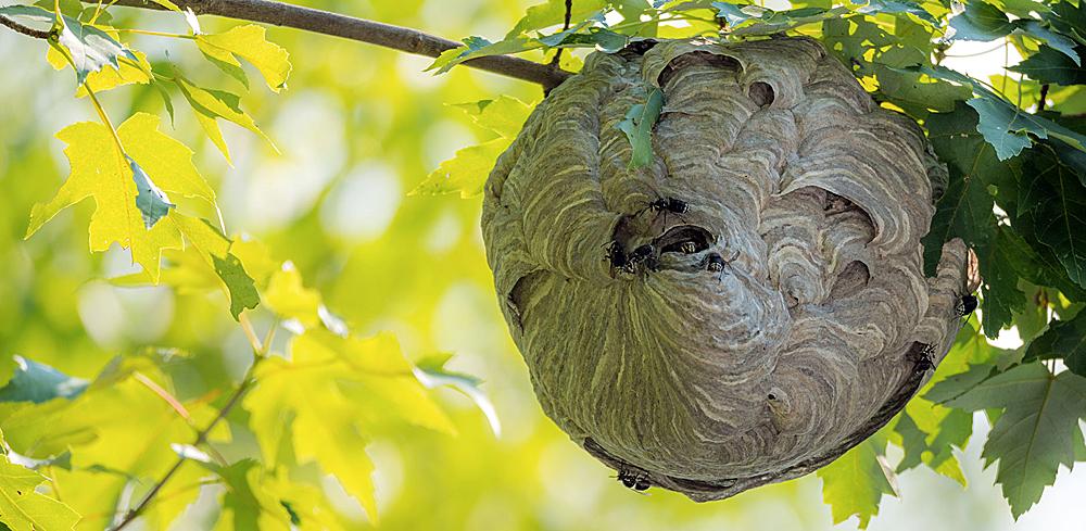 Отверстия чуть ниже низа гнезда - это входы для рабочих ос.