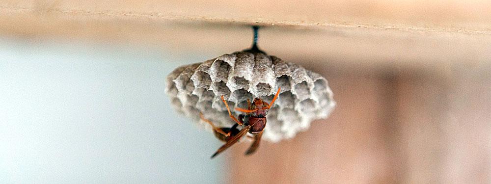 Эта ножка весьма и весьма крепка - она выдержит массу гнезда, которое увеличится в размерах в сотни раз.