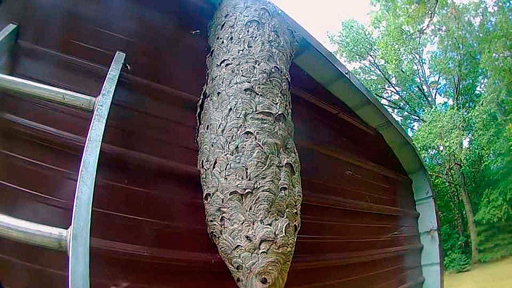 Это гнездо тоже построено за один сезон.