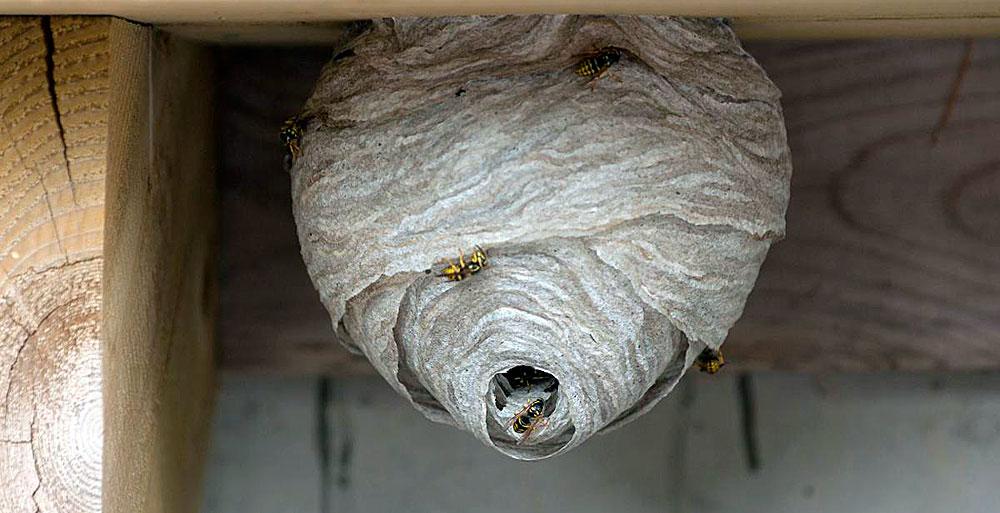 Размер такого гнезда - около 30-40 см в диаметре в самом широком месте.