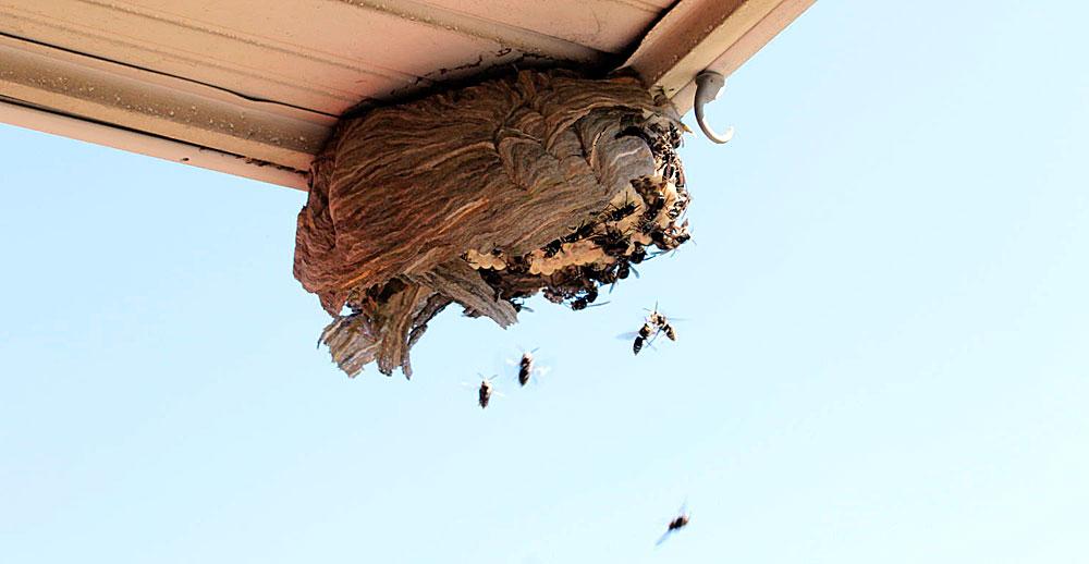 Так строится уже корпус всего гнезда.
