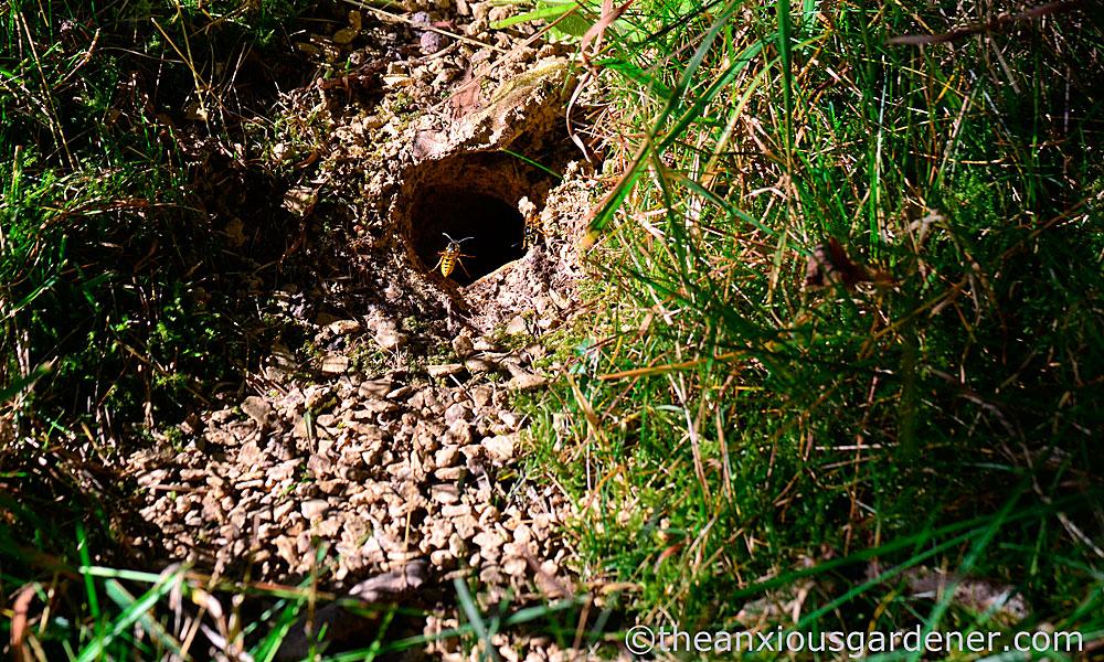 Интересно, что такие земляные гнезда проще всего уничтожать.